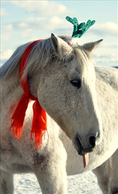 Astron Christmas Horse resized.jpg